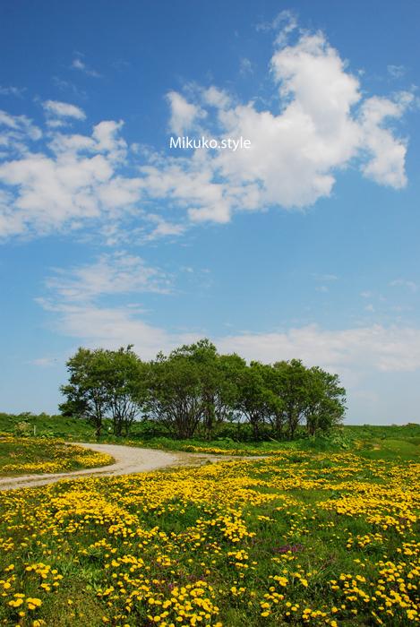 たんぽぽ2012_01